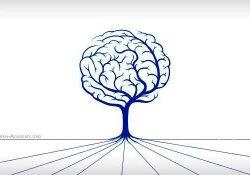 مدیریت دانش و اجزای آن
